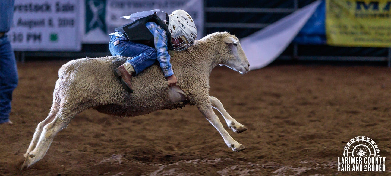 Larimer County Fair The Ranch Larimer County